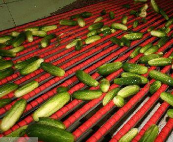 HBI Cucumbers on the Grading Machine